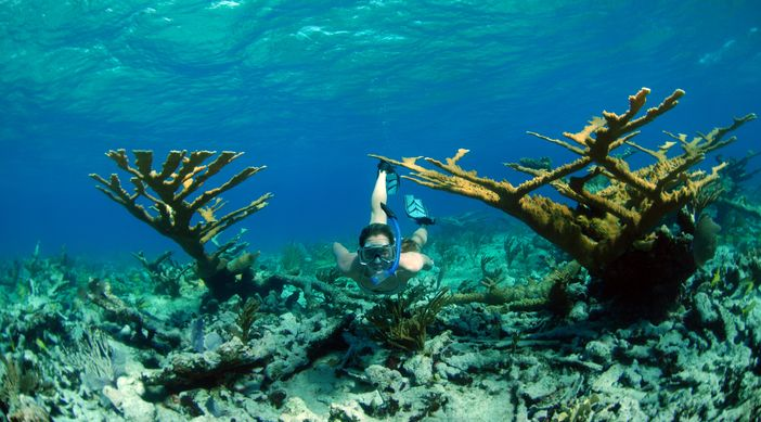 Things to do in CocoCay: Snorkeling