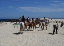 Activities to Do In Cabo San Lucas: Horseback riding tour