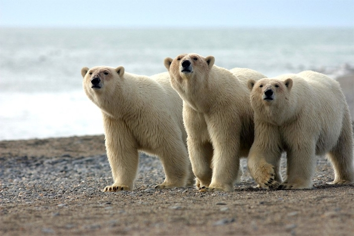 Arctic cruise attractions