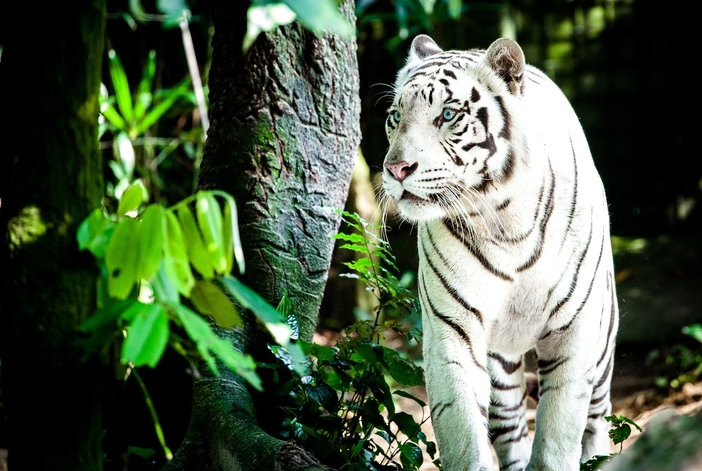 Things to do in Singapore: Visiting the Zoo