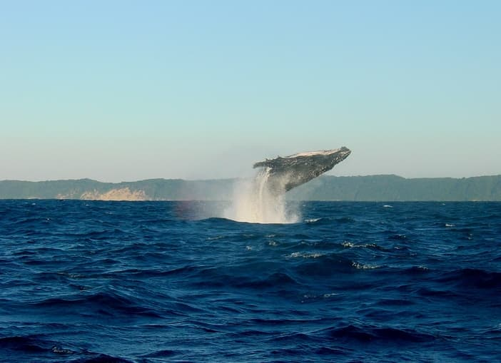 whale jumping out